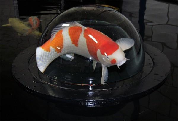 Aquaforte Fish Globe Ø 500